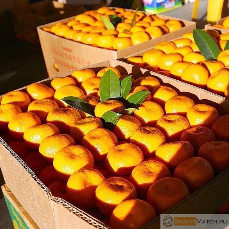 фрукты и овощи питание